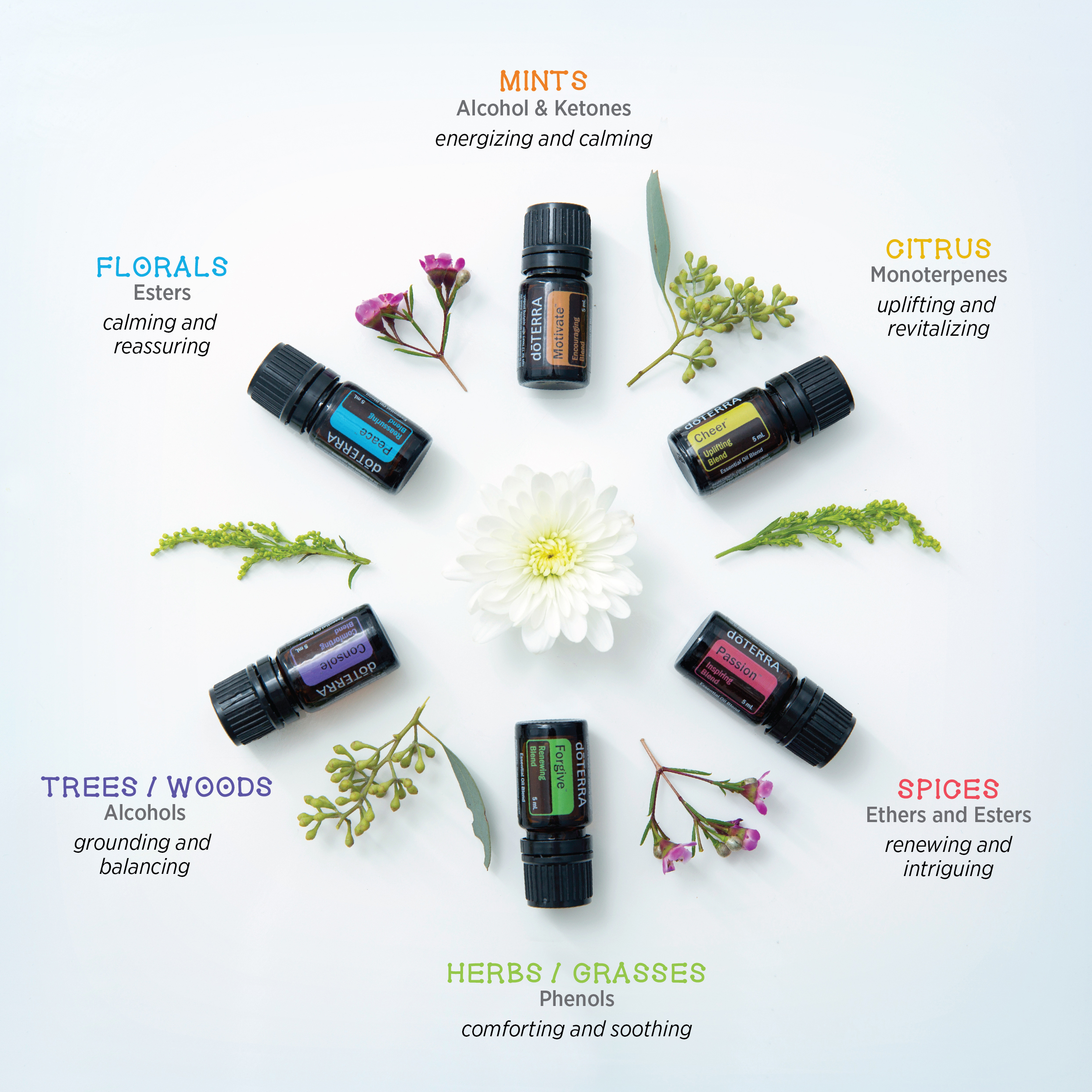 Image result for emotions and doterra pain